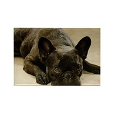 FRENCH BULLDOG LYING DOWN Rectangle Magnet