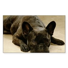 FRENCH BULLDOG LYING DOWN Decal