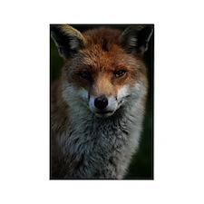 Adult Red Fox Portrait Rectangle Magnet