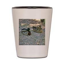 domestic ducks Shot Glass