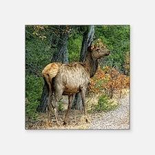 "grand canyon elk doe Square Sticker 3"" x 3"""