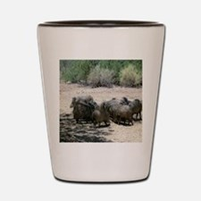 javelina - desert wild pigs Shot Glass