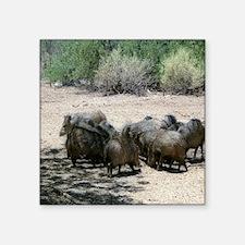 """javelina - desert wild pigs Square Sticker 3"""" x 3"""""""
