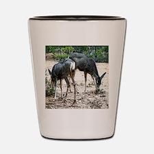 whitetail deer family Shot Glass