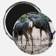 whitetail deer family Magnet