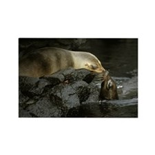 GALAPAGOS SEA LIONS KISSING Rectangle Magnet