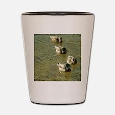 sychronized swimming ducks Shot Glass