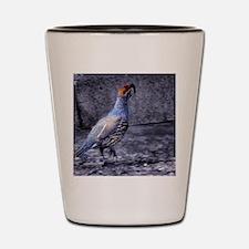 gambel quail Shot Glass