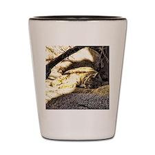 wildcat - bobcat Shot Glass