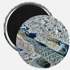 diamondback rattlesnake Magnet