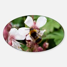14x10 bee Decal