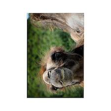 Bactrian Camel Rectangle Magnet