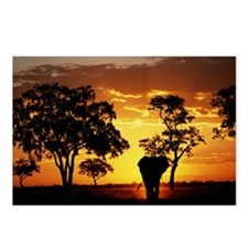 Elephant Loxodonta africa Postcards (Package of 8)