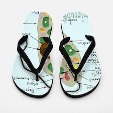 Euglena square Flip Flops