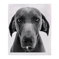Blue weimaraner dog staring Throw Blanket