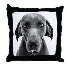 Blue weimaraner dog staring Throw Pillow
