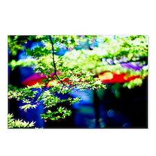 Japanese garden sun shine Postcards (Package of 8)