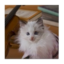 Rag Doll Kitten and Art Tile Coaster