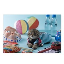 Scottish Fold Kitten and  Postcards (Package of 8)