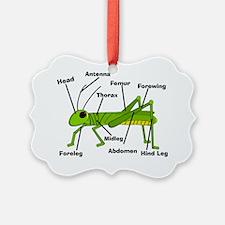 Grasshopper Anatomy Gails Ornament