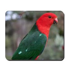 King parrot Mousepad