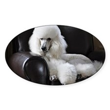 White standard poodle  Decal
