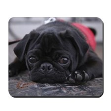 Pug lying down Mousepad