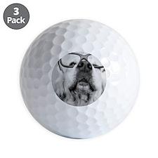 Dog wearing glass Golf Ball