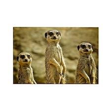 Three Meerkats standing Rectangle Magnet