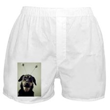 Shepherd mix with funny hat Boxer Shorts