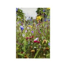 close-up of field of wild flowers Rectangle Magnet