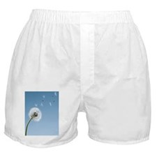 Dandelion seeds blowing from stem Boxer Shorts
