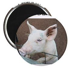Forbidden Pork Magnet