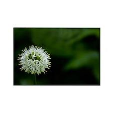 Flower of one wheel Rectangle Magnet