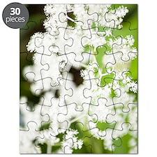 Rodgersia podophylla Puzzle