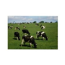 Ireland, Dairy Cattle Rectangle Magnet