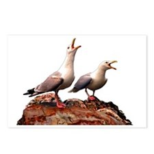 Catcalling Sea Gulls Postcards (Package of 8)