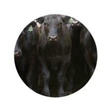 "Angus cattle in Sonoma County, CA. 3.5"" Button"