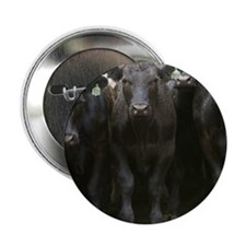 """Angus cattle in Sonoma County, CA. 2.25"""" Button"""
