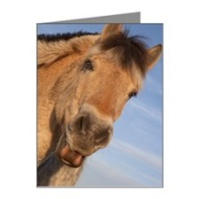 A Norwegian Fjord Horse Note Cards (Pk of 10)