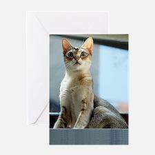 Singapura Cat True Beauty Linus Greeting Card