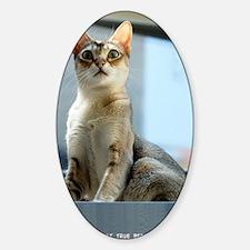 Singapura Cat True Beauty Linus Decal