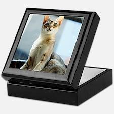 Singapura Cat True Beauty Linus Keepsake Box