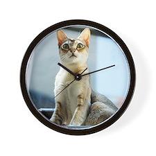 Singapura Cat True Beauty Linus Wall Clock