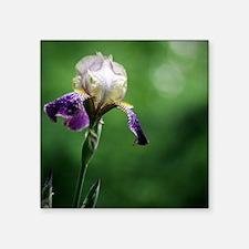 """Purple Iris in the Rain Square Sticker 3"""" x 3"""""""