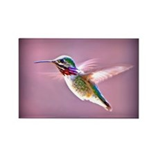 Male Calliope Hummingbird Rectangle Magnet