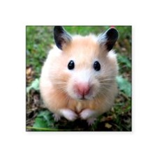 "Syrian hamster outdoors Square Sticker 3"" x 3"""