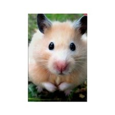 Syrian hamster outdoors Rectangle Magnet