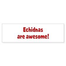 Echidnas are awesome Bumper Bumper Sticker