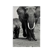 African elephant and calf Rectangle Magnet